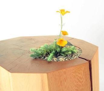 Plantenbak tafel van een boomstam gemaakt.
