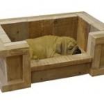 Hond enmand in een steigerhout kist.