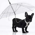 Parasol voor een hondje.