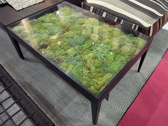 Koffietafel met planten onder het glazen tafelblad for Tafelblad steigerhout maken